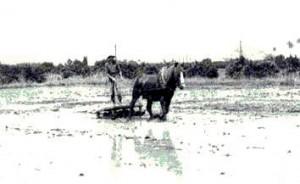 Cultivo del arroz - Historia de la paella valenciana